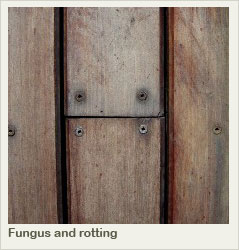 Fungus and rotting
